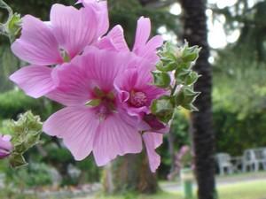 jaillissement_fleurs-2.jpg