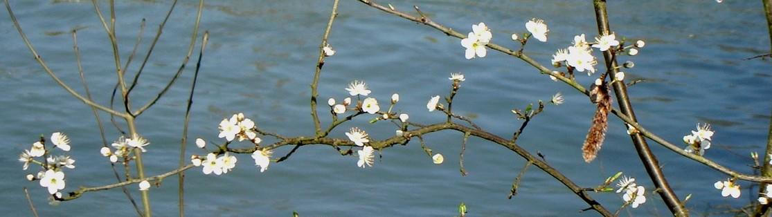 Fleurs_sur_l_eau_3.jpg
