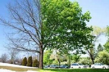 arbre_sec.jpg